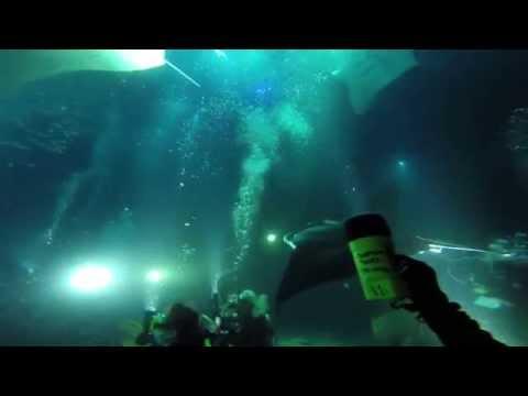 Manta Ray Night Dive With Torpedo Tours, Kona, HI