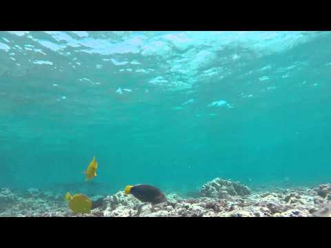 Kahaluu Bay snorkeling gopro hero 3 plus black