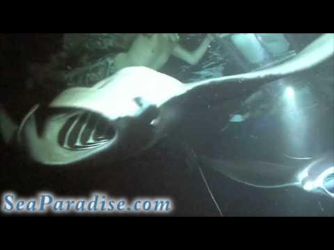 Kona, Hawaii Manta Night Snorkel