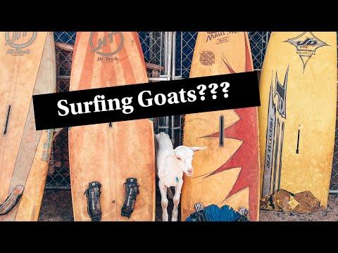 SURFING GOAT DAIRY FARM // Maui, Hawaii