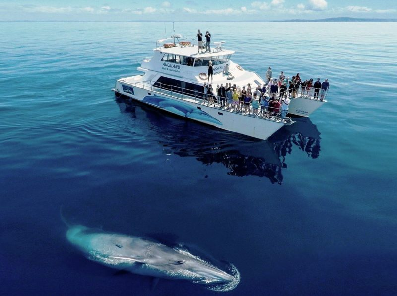 whale watching, boat tour