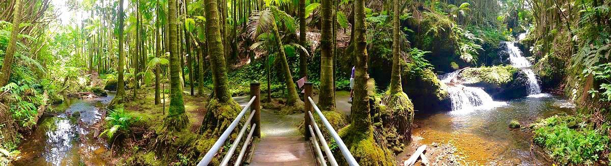hawaii tropical botanical garden, waterfall, bamboo, big island,