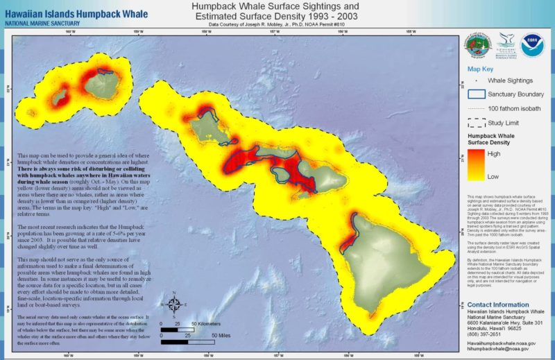 Humpback whales sightings on Hawaii