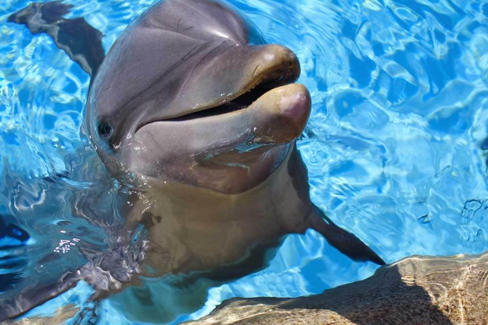 Swim With Dolphins Hawaii Big Island
