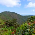 Look into Waipio valley from the back, with ohia lehua flowers in the foreground