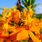 The wet and warm climate of Puna makes it an ideal environment for tropical flowers