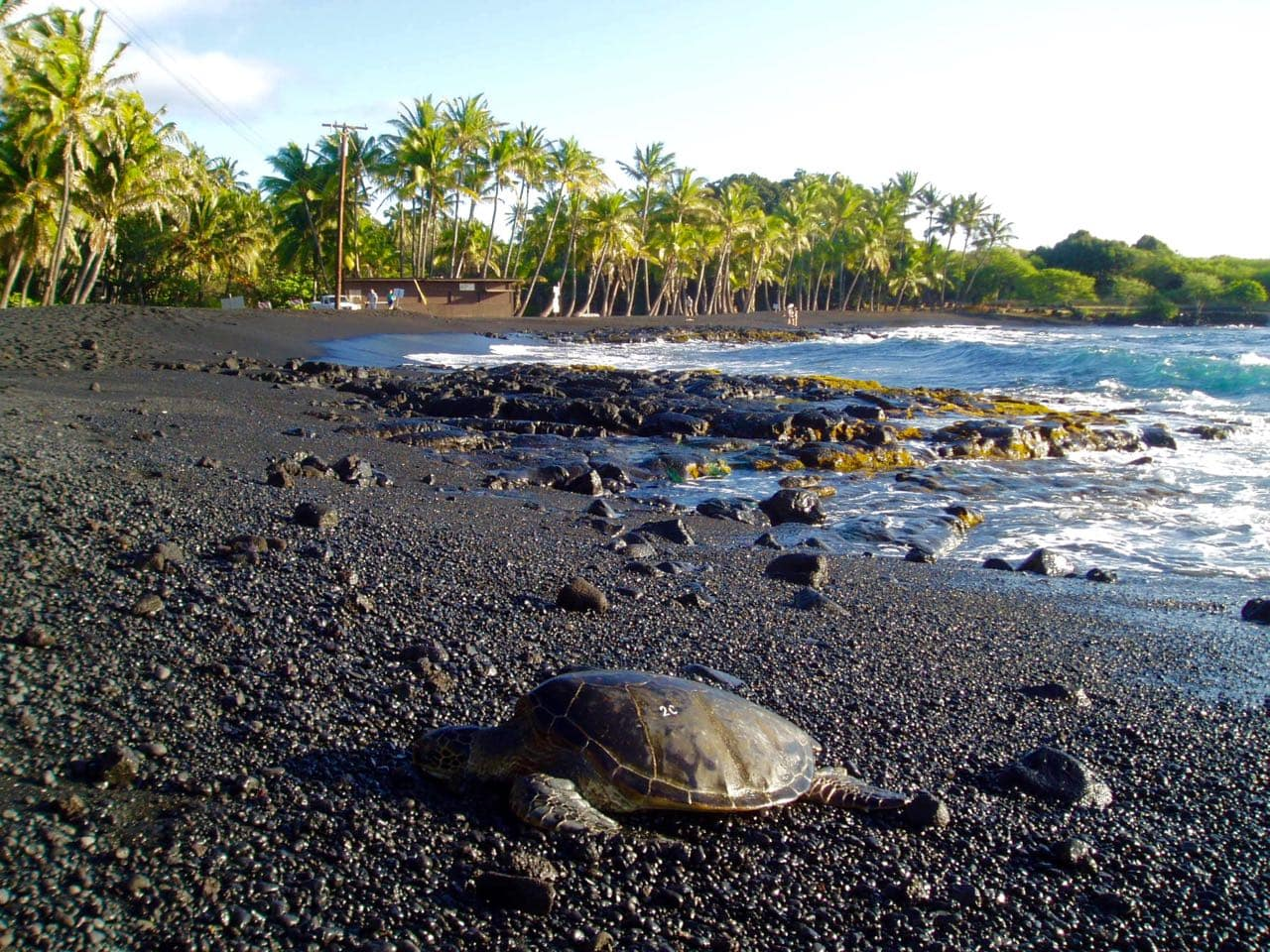 Punaluu beach