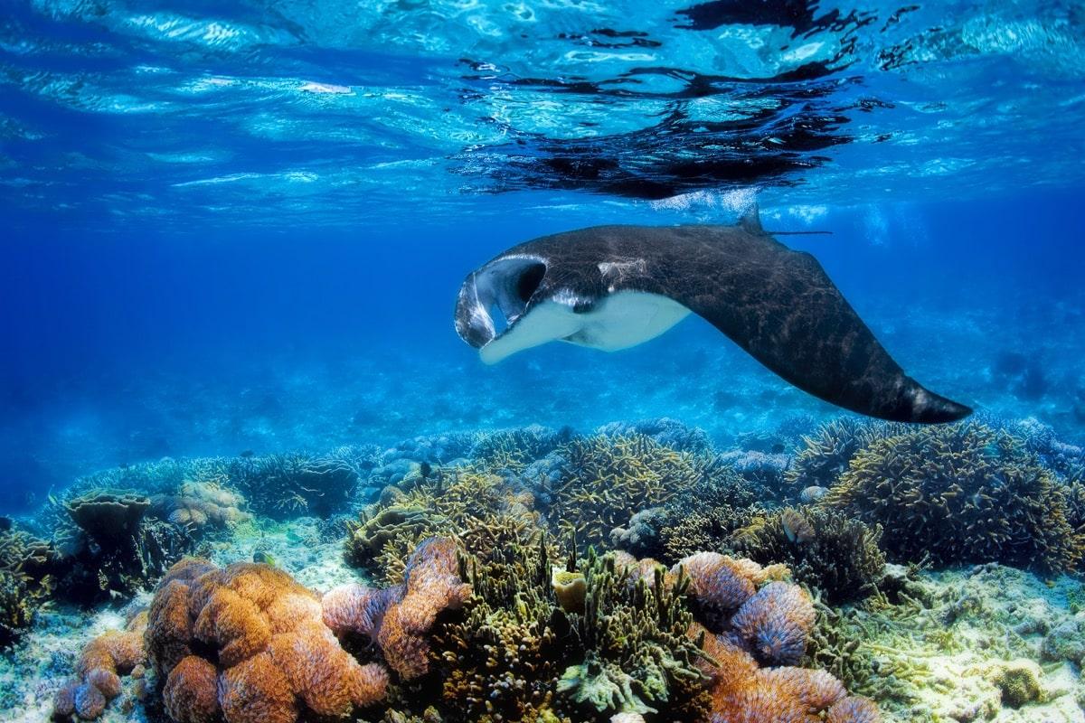 Sunset Manta Ray Snorkeling Tour