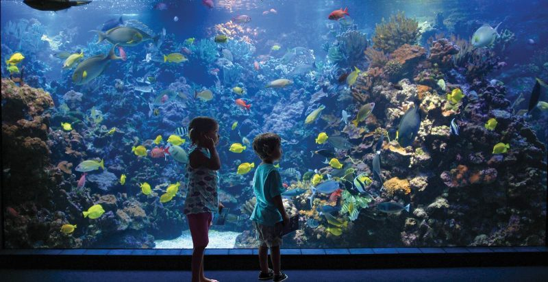 2 kids in fron of the shallow reef exhibit in the Maui Ocean Center