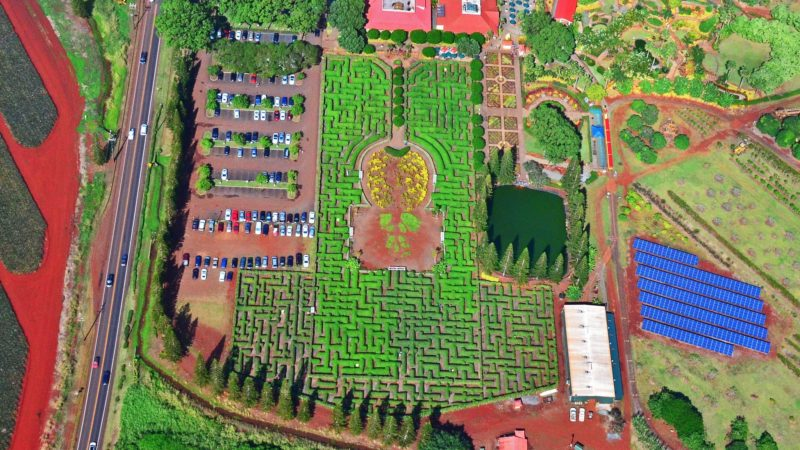 The Dole Plantation Pineapple Maze