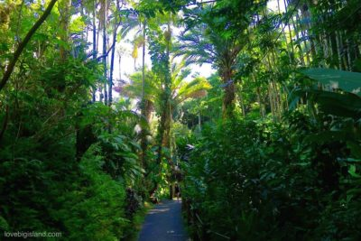 hawaii tropical botanical gardens, botanical gardens, hilo, hawaii, big island