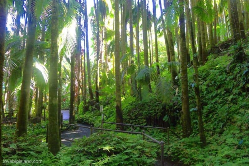 HTBG, Hilo, Hawaii, hamakua coast, onomea scenic drive, hawaii tropical botanical gardens, botanical garden, big island