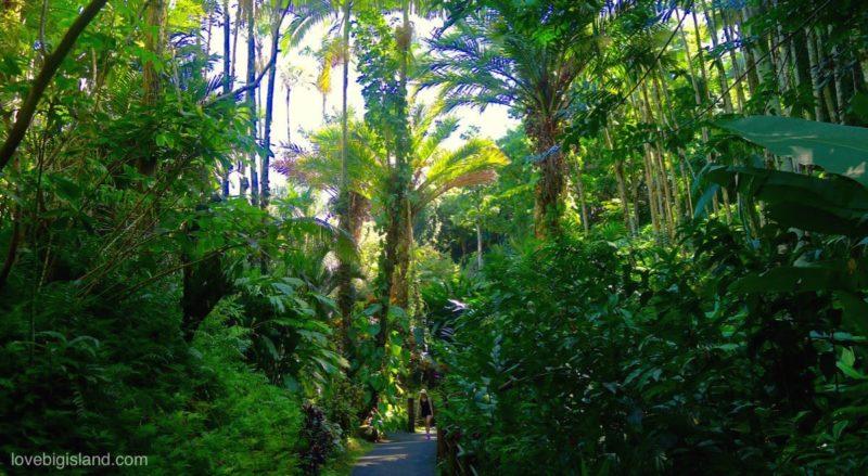 botanical garden, big island, HTBG, Hilo, Hawaii, hamakua coast, onomea scenic drive, hawaii tropical botanical gardens