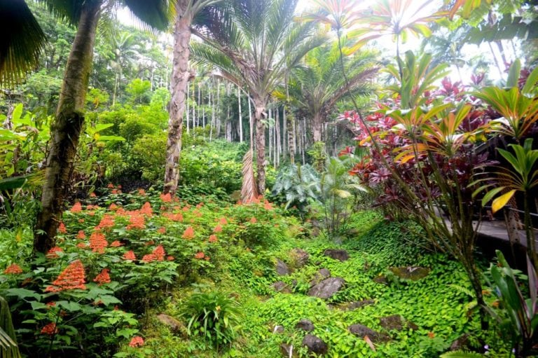 botanical garden, big island, hawaii, htbg