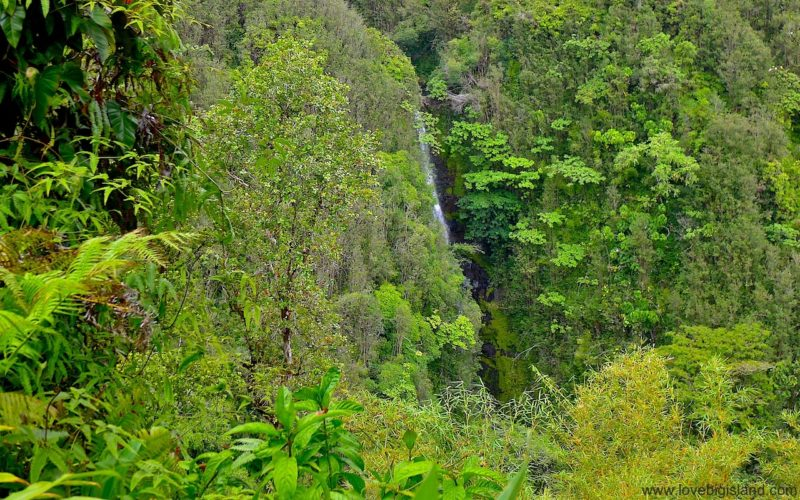 Kahuna falls in the Akaka falls state park on the Big Island