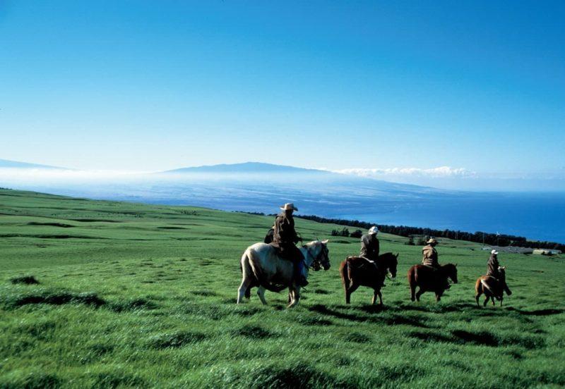 Cowboys, kohala volcano, pasture