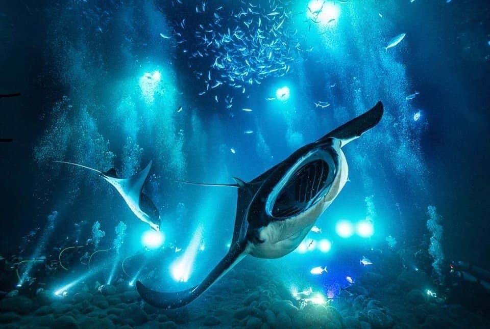 Manta Ray Night Snorkel & Dive
