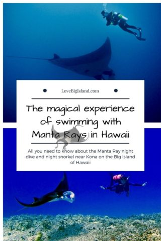 manta ray, night dive, night snorkel, big island, kona, hawaii