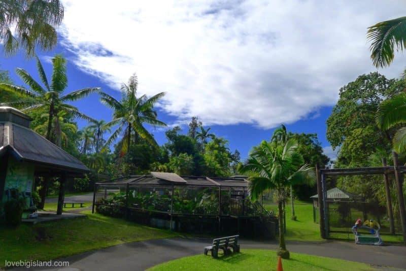 panaewa rainforest zoo, hilo, hawaii