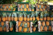 Maui pineapple for sale at a roadside stand