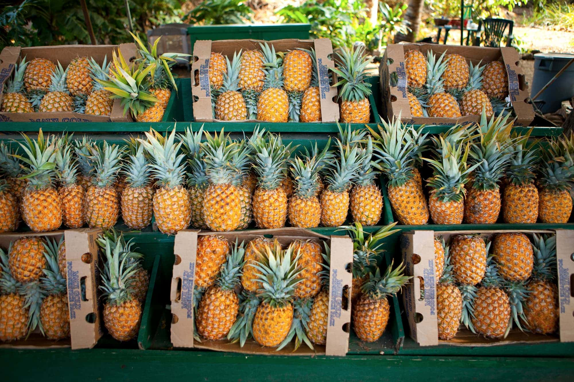 Pineapples in Hawaiʻi: 🍍history, 🍍facts, and 🍍trivia