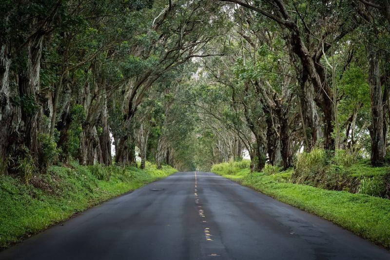 The Poipu Tree Tunnel on Kauaʻi