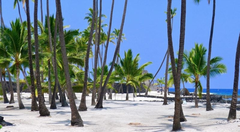 coconut grove in Pu'uhonua (place of refuge)