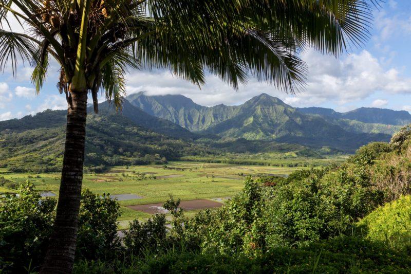 taro firlds in Hanalei, Kauai