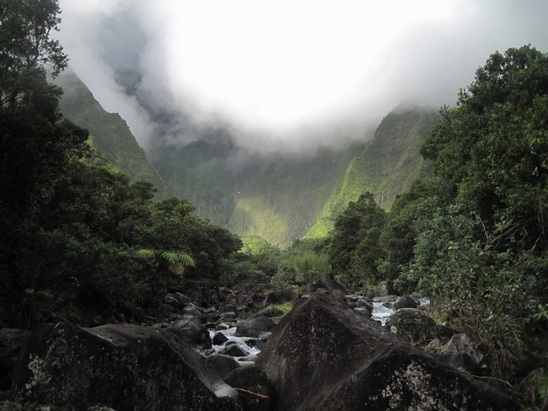 Views along the trail to the Waieleale Falls