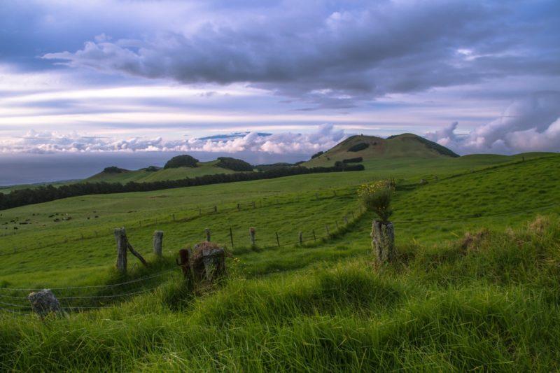 pasture land above waimea